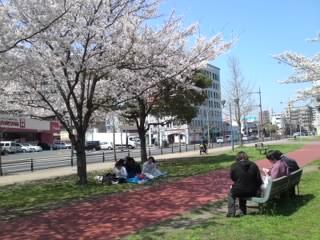 花見昼食(メディアドーム横)