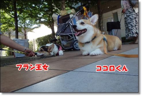 0069_large.jpg