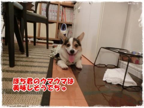 0149_large.jpg