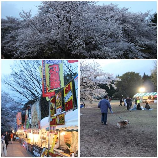 光が丘公園の桜2014