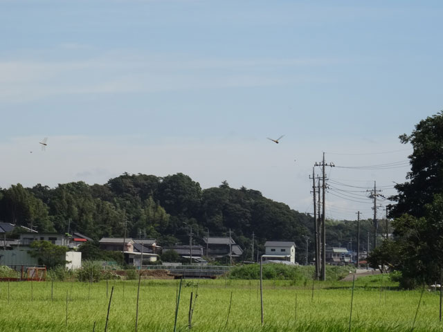 トンボ飛行1