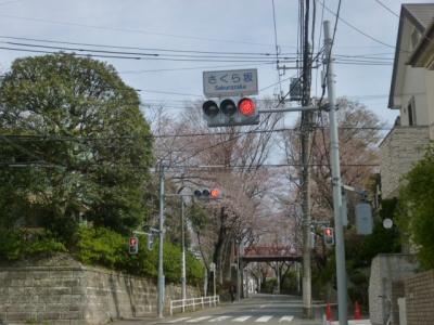 桜坂 (2)