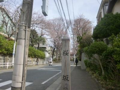 桜坂 (4)