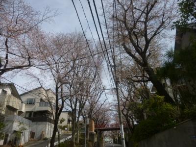 桜坂 (5)