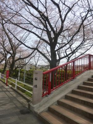桜坂 (7)