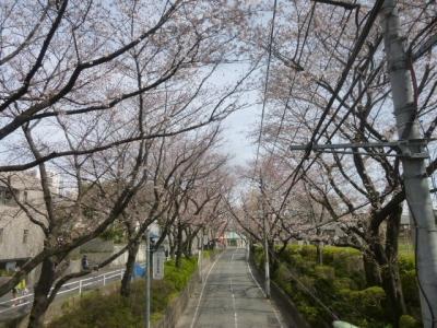 桜坂 (9)