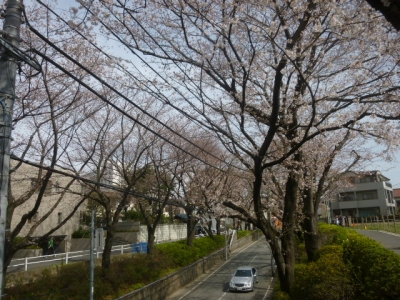 桜坂 (10)