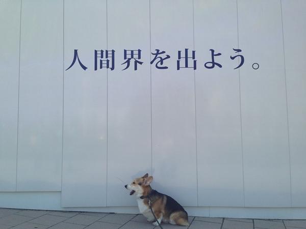 14_20140328161910a81.jpg