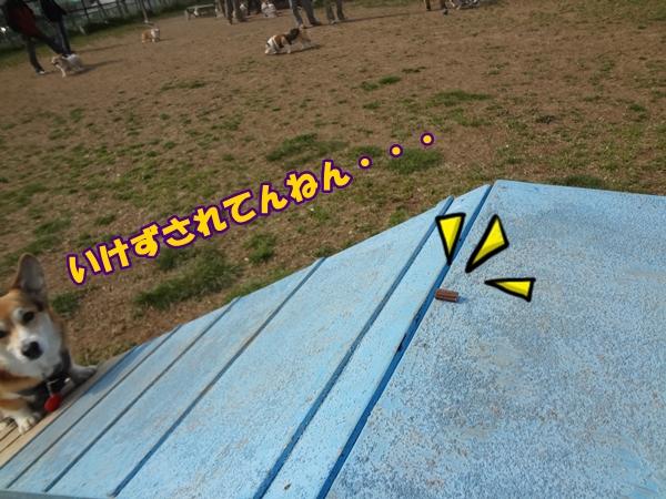 1_2014032216263578c.jpg