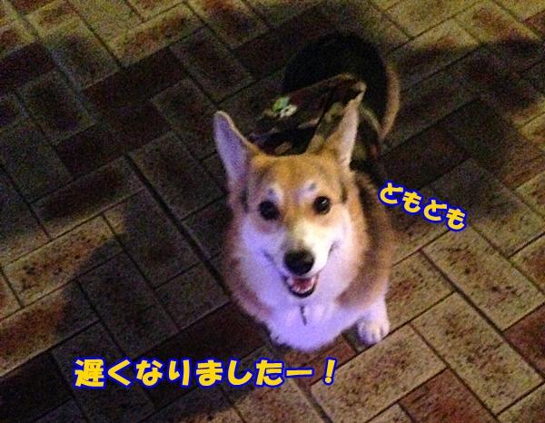 1_20140808164113dcd.jpg