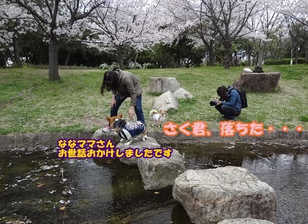 DSC06442.jpg