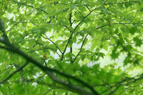 IMG_9513yahazukibitaki.jpg