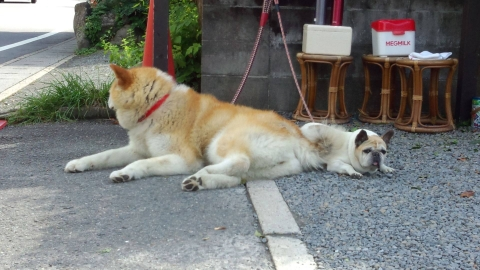鞍馬寺の犬たち