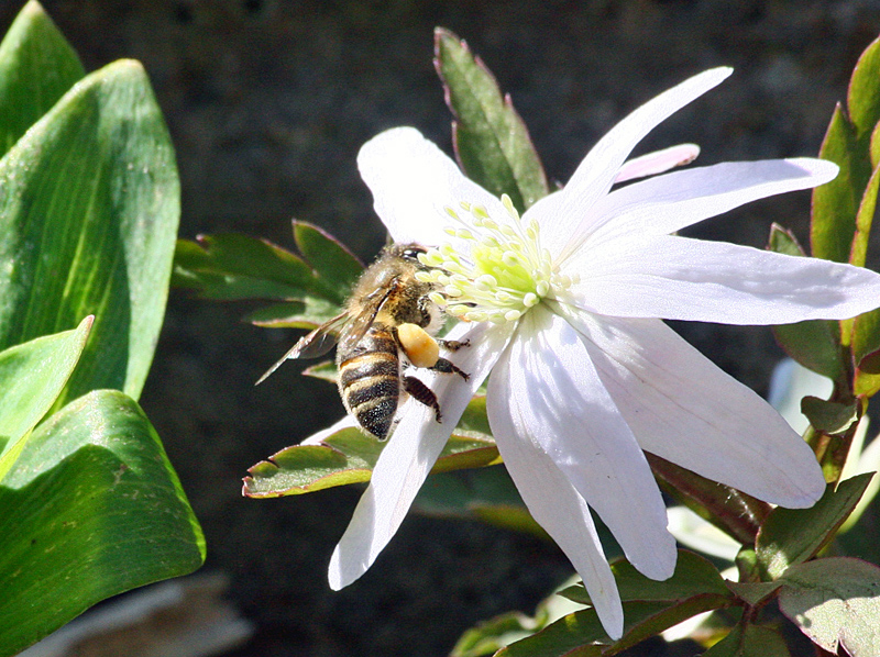 花と昆虫1