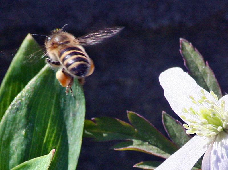 花と昆虫2