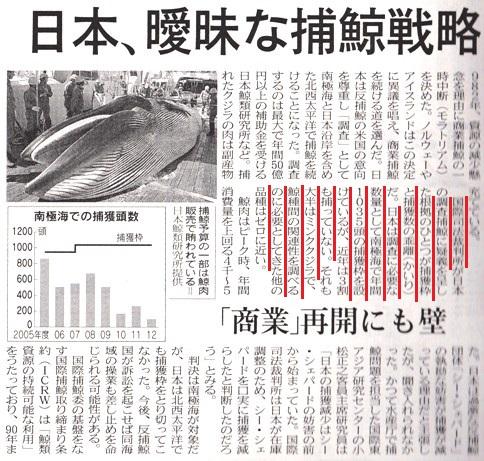 捕鯨 .jpg