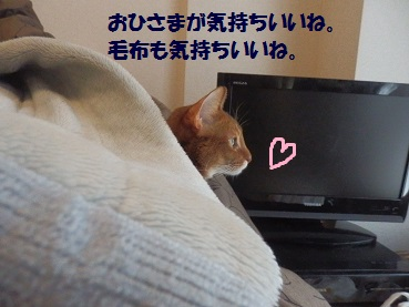 P3294162.jpg