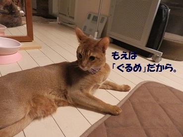 P4234440.jpg