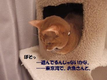 P426446-3.jpg