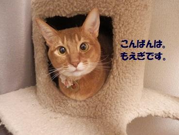 P4264464.jpg