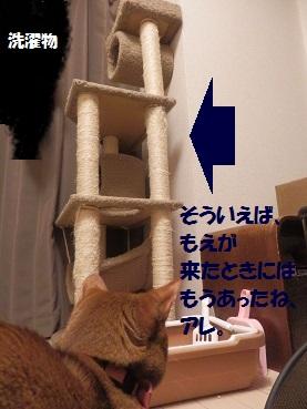 P6305013.jpg