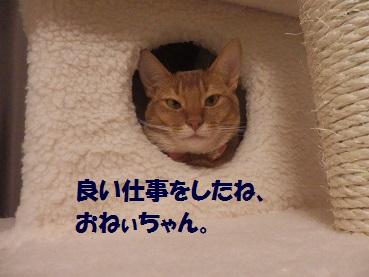 P7065079.jpg