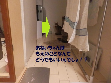 P7115117.jpg