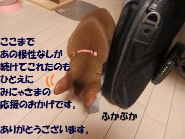 P7145186.jpg