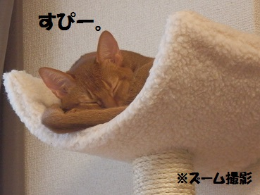 P8155497.jpg