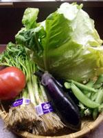 2014-4春野菜