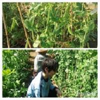 2014-5収穫