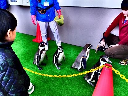 ペンギンパレード1
