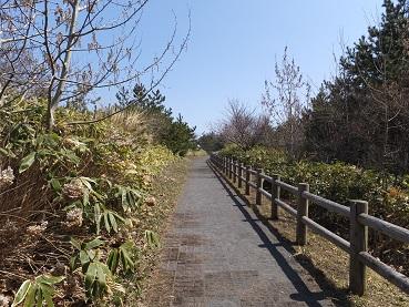 展望台散策路2
