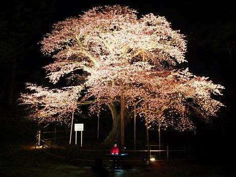 大桜LIVE2
