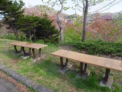 祝津桜並木9