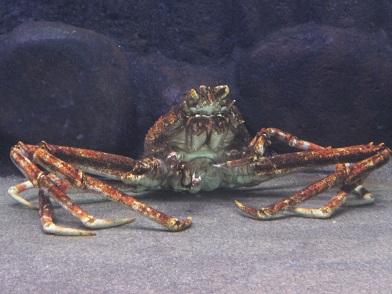 12タラバ蟹
