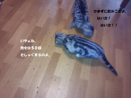 20140720-2.jpg
