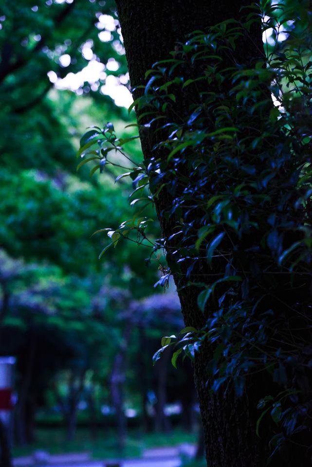 20140428-DSC_8378.jpg