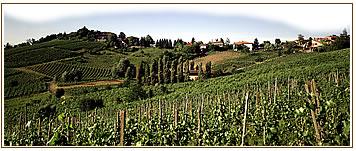 panorama_vigne_20140604211002726.jpg