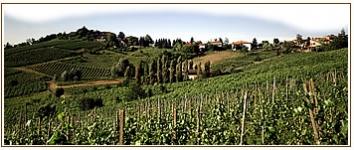 panorama_vigne.jpg