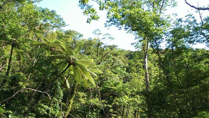 大国林道の木々[1]