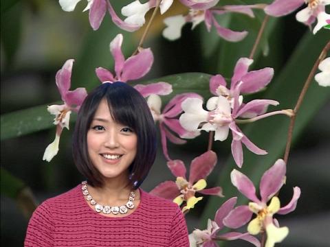 竹内由恵 ランの花言葉は優雅な女性