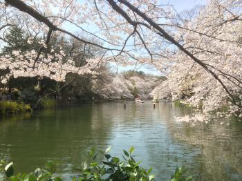 桜とお池♪