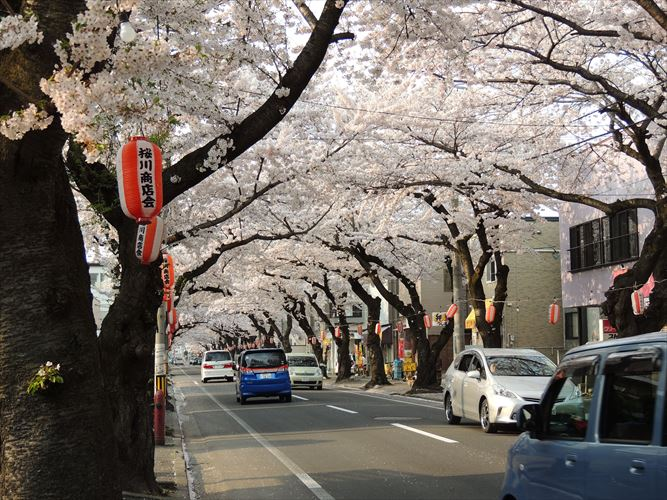 H26年5月10桜 420_R