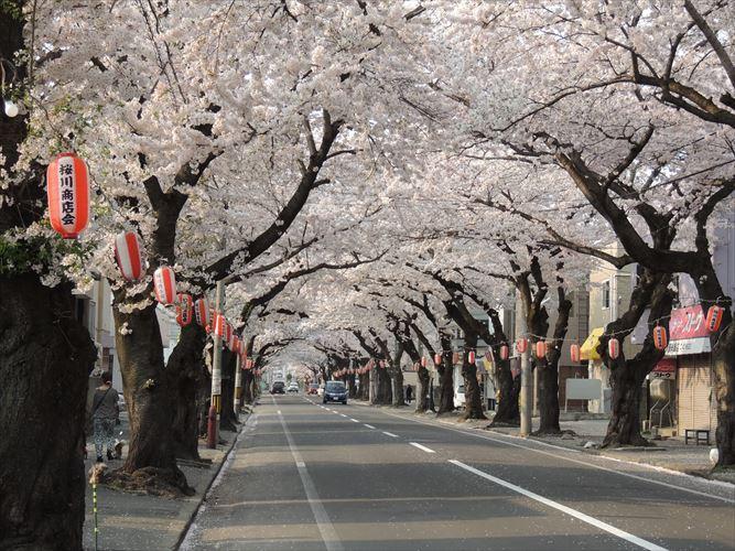 H26510桜 386_R