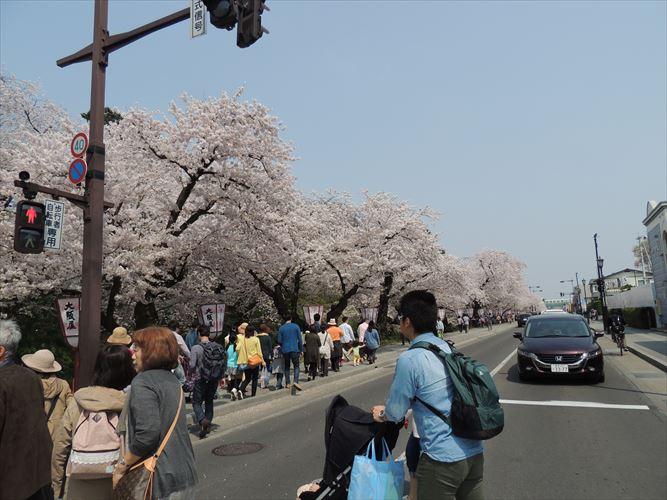 H26510桜 058_R