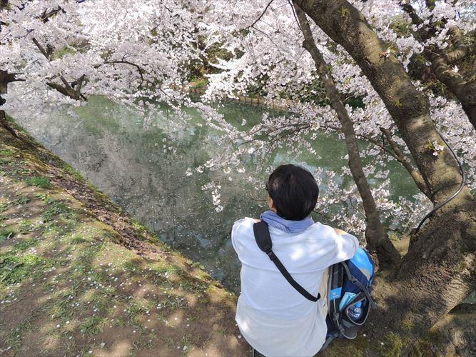 H26510桜 071_R