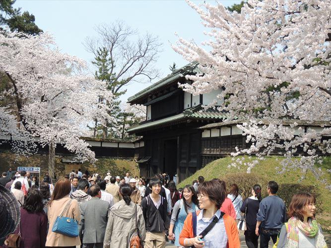 H26510桜 109_R