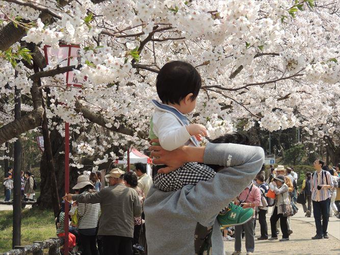 H26510桜 142_R