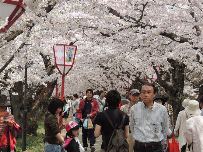 H26510桜 294_R